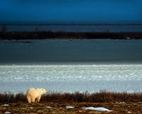 Churchill polar bear kingdom