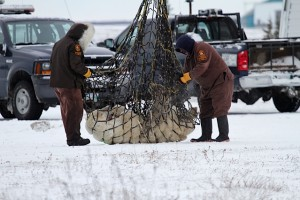Churchillpolar bears airlifted.