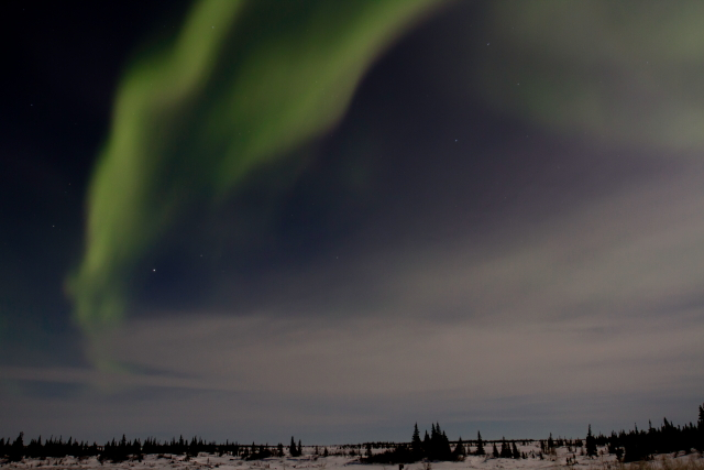Aurora over the taiga.