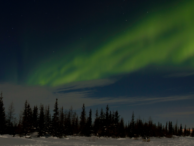 Aurora above the boreal forest. Brad josephs photo.