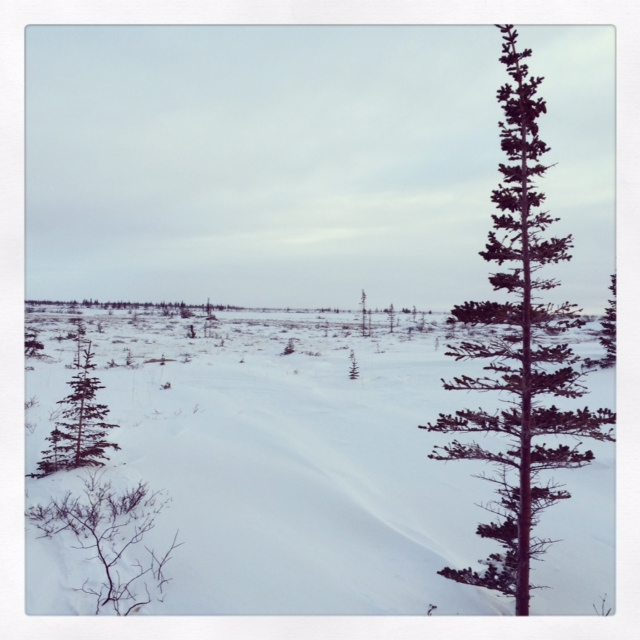 Bleak and beautiful Churchill landscape. Sam Stein photo.