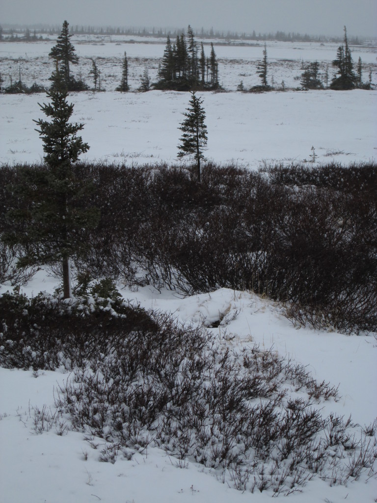 An opening to a fox den on Christmas Lake esker in the Churchill Wildlife Management Area in Churchill, Manitoba.