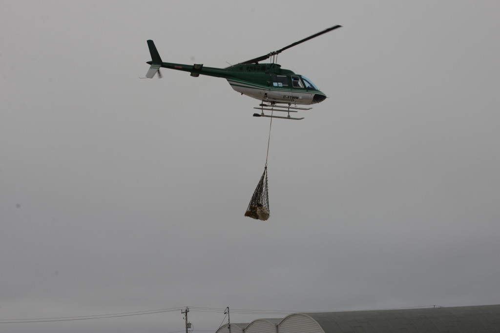 A polar bear is airlifted up north from Churchill, Manitoba.