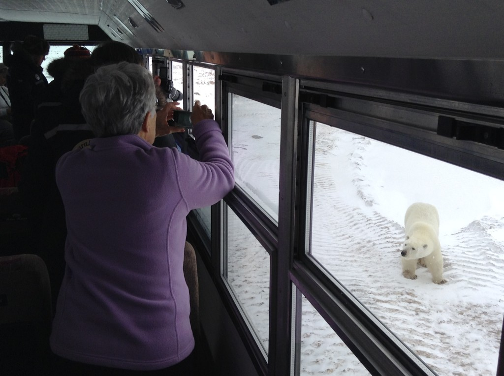 Natural Habitat travelers photograph a polar bear from their polar rover in Churchill, Manitoba.
