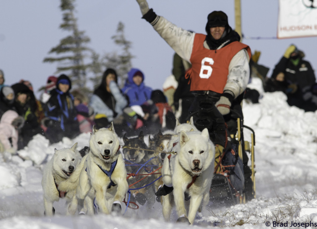 Hudson Bay Quest musher and dogs.