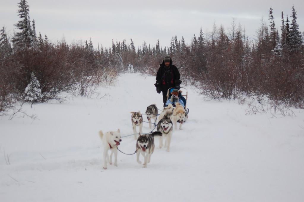 Charlie Lundie and his Churchill,Manitoba dog team.