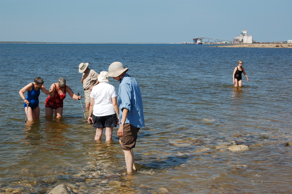 Natural Habitat travelers swimming in the Churchill River in Churchill, Manitoba. Steve Selden photo.