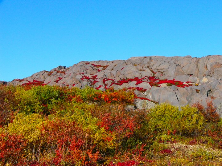 Fall colors in the tundra and pre cambrian sheild, Churchill, Manitoba.