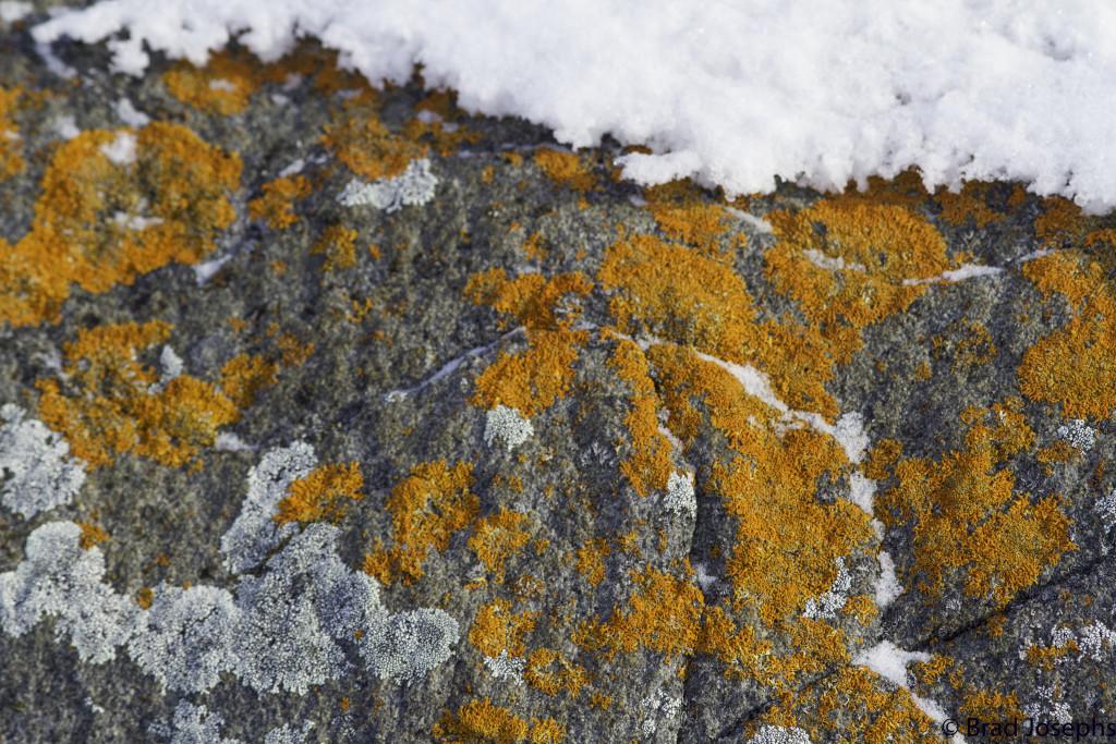 Lichen on the rocks in Churchill.