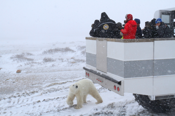 Polar bear and polar rover.
