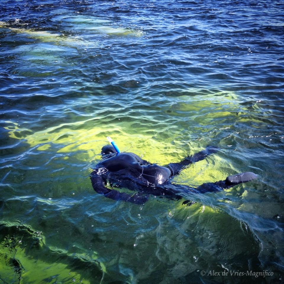 snorkel with belugas ADVM 3