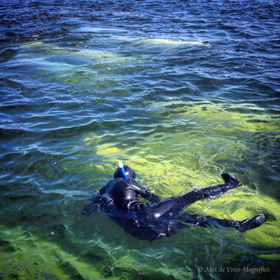 snorkel with belugas ADVM 4
