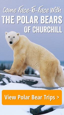 Natural Habitat Adventures Polar Bear Tours