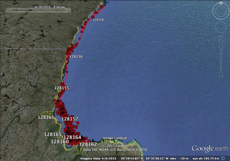 Beluga migration map