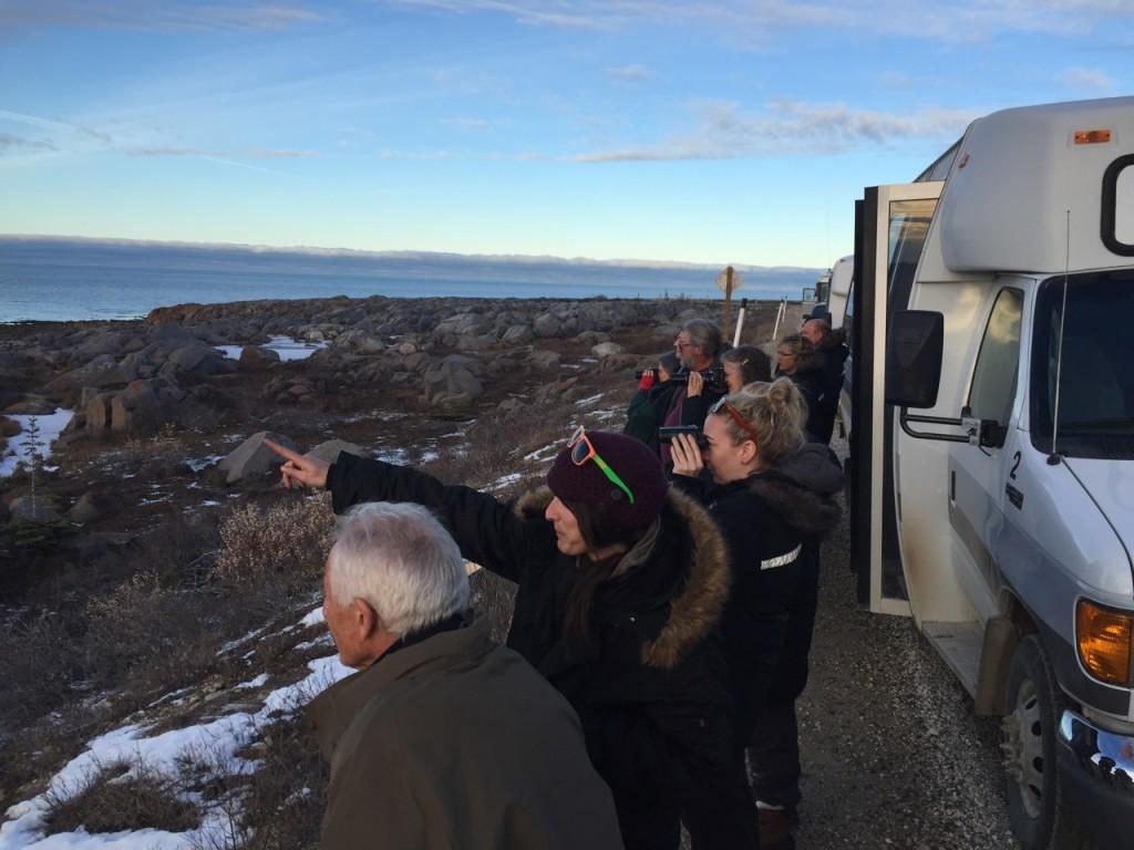 Beluga whales Drew Hamilton