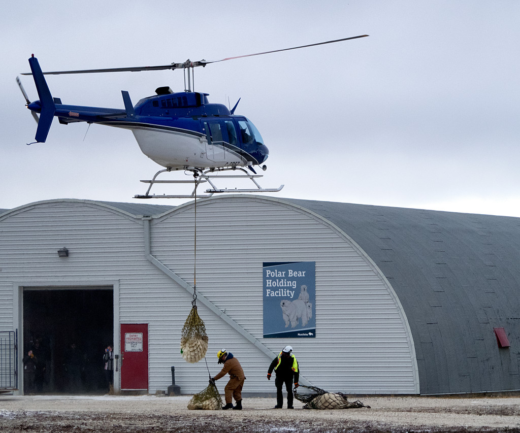 polar bear lift in Churchill