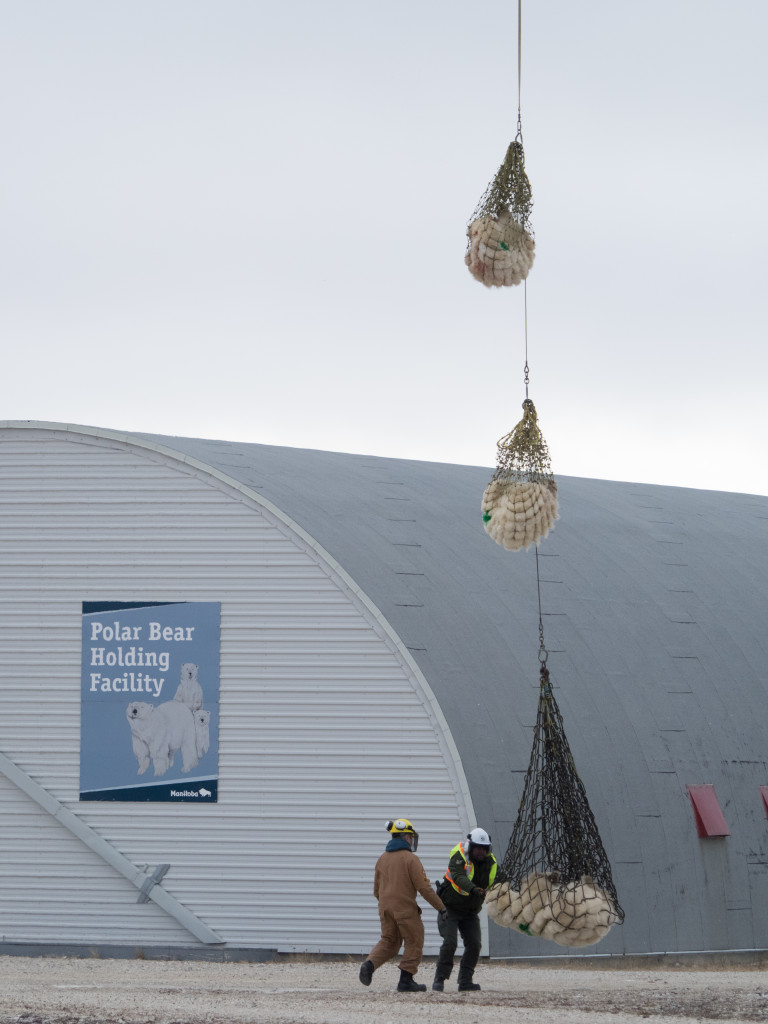 polar bear lift in Churchill, Manitoba