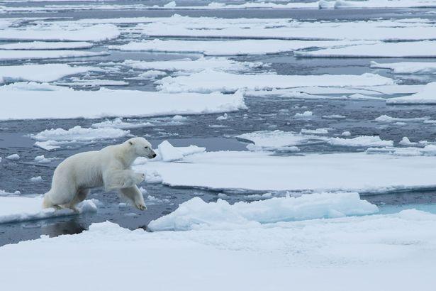 polar bear Kyriaksos Kaziras