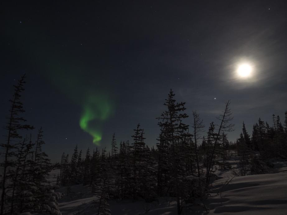 Boreal forest aurora borealis churchill, manitoba
