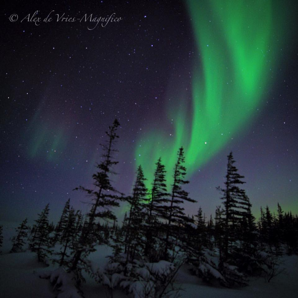northern lights in churchill,mb