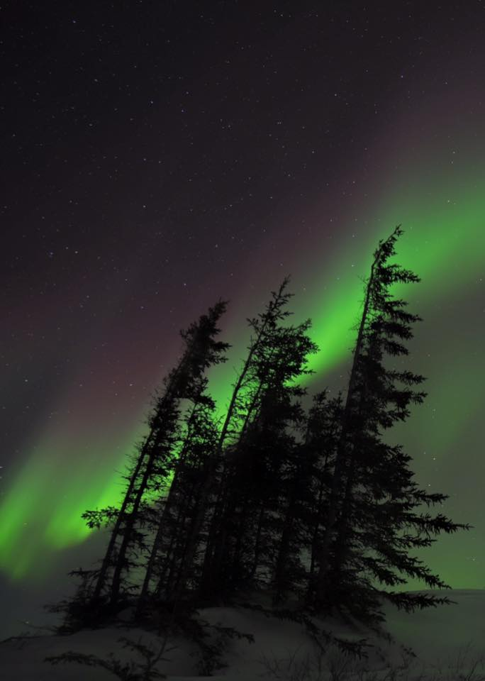 northern lights above the churchill, Manitoba boreal forest