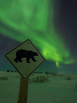 northern lights in Churchill polar bear sign