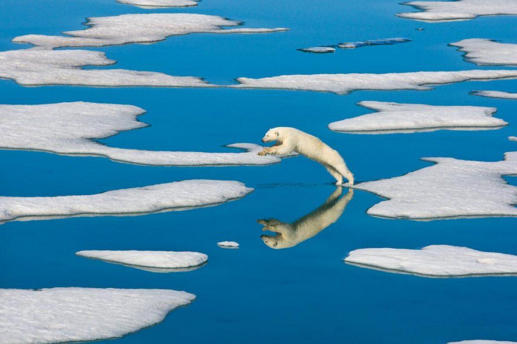 polar bear ice floe