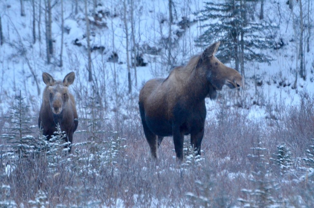moose churchill manitoba