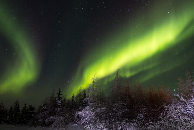 Northern lights boreal forest churchill