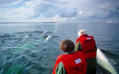 DFO Trying to Impose Beluga Restrictions