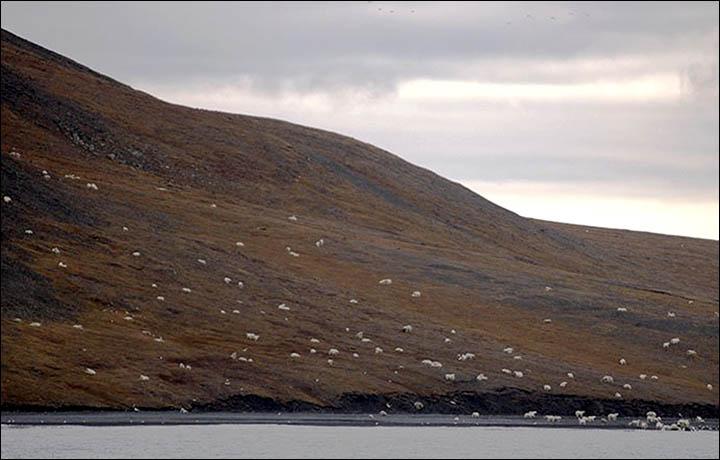 wrangell island whale kill.