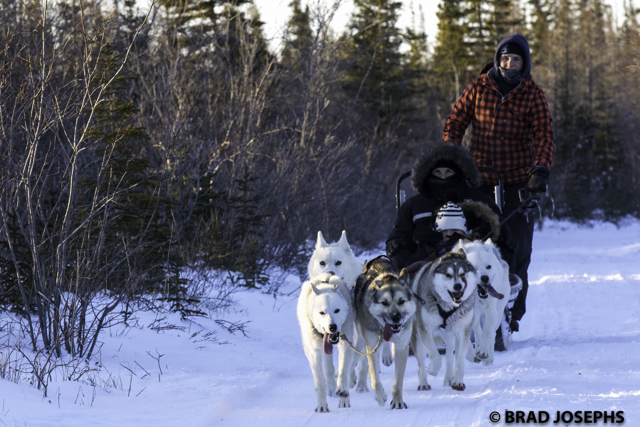 churchill dog sledding