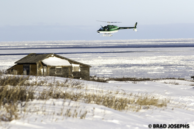 polar bearPolar bear alert helicopter in Churchill