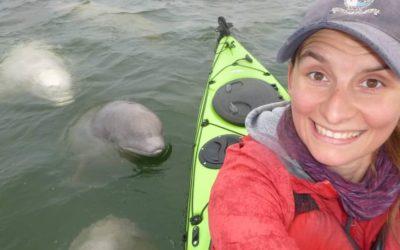 Sea North Beluga Spyhop