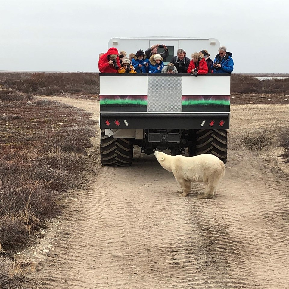 Polar rover and polar bear in Churchill