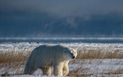 Churchill Field Report – Ice Recedes